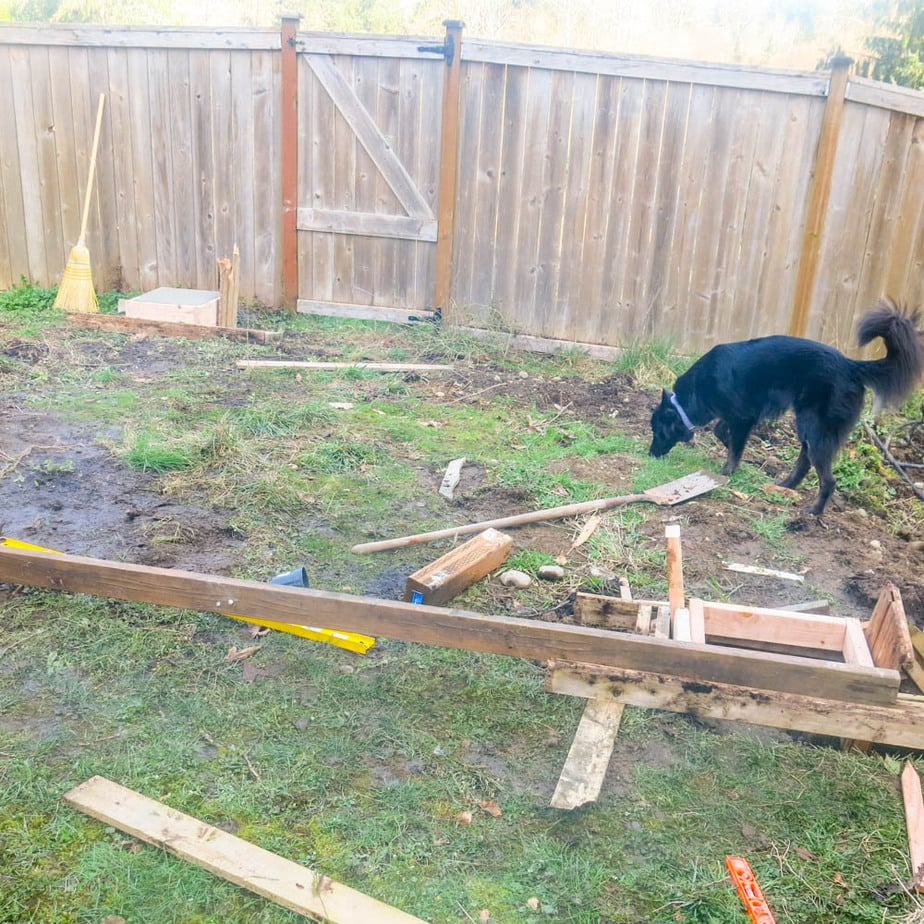 backyard site being prepared to install a patio for the Costco gazebo from Yardistry Structures. A black dog is sniffing the ground