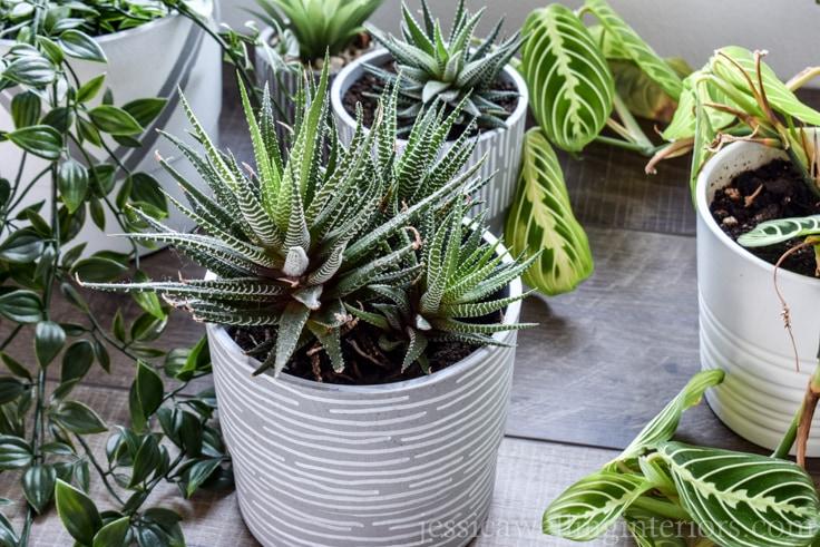 Easy DIY Indoor Plant Pots!