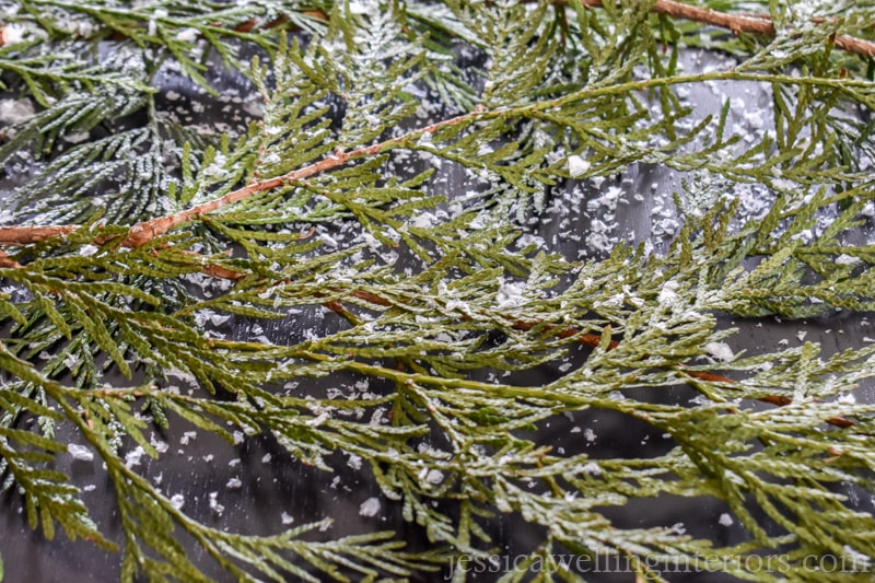 close-up of cedar branckes with fake snow