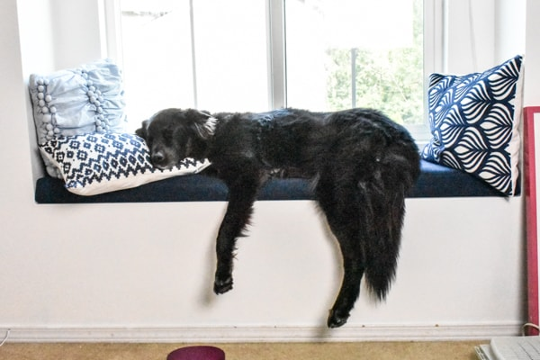 window with blinds open and natural light pouring in and large black dog sleeping on window seat