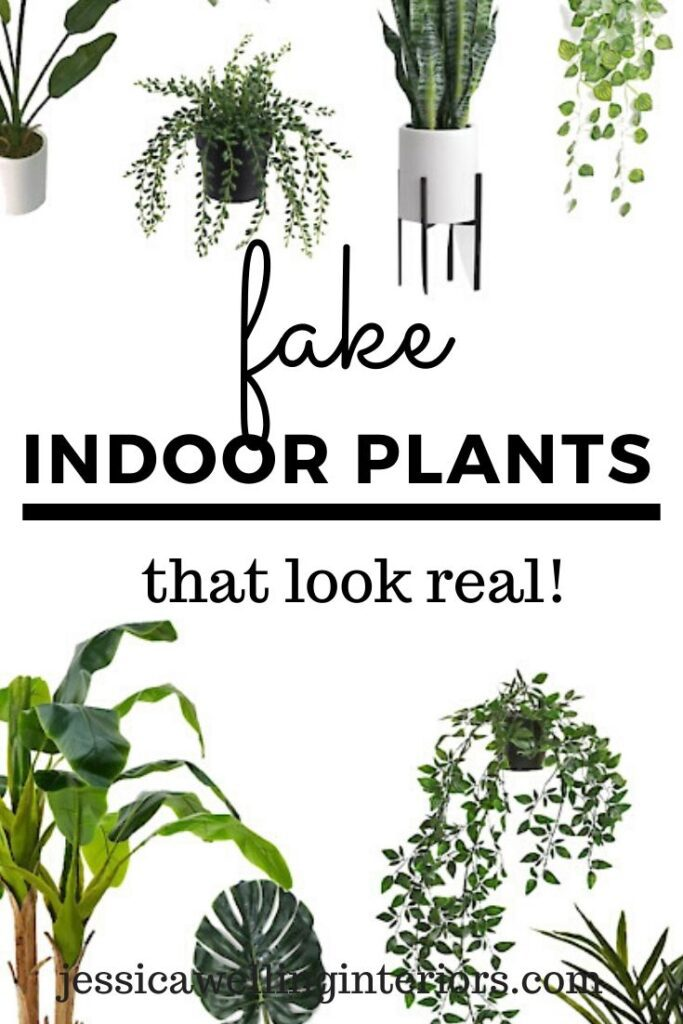 Fake Indoor Plants That Look Real! Collage of modern houseplants on a white background
