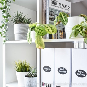 white bookshelf with several different indoor plants on the shelves