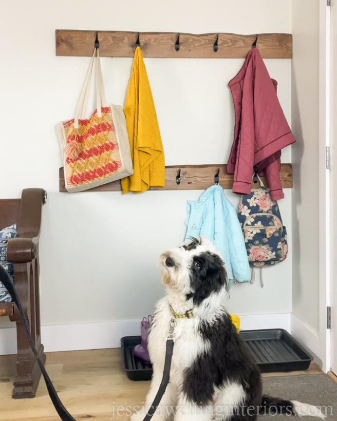 2 wall-mounted coat racks in the background with a black and white sheepadoodle puppy on a leash in the foreground